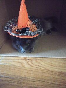 dark gray cat in an orange witch hat